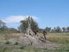 Huge Termite mound, Okavango Delta