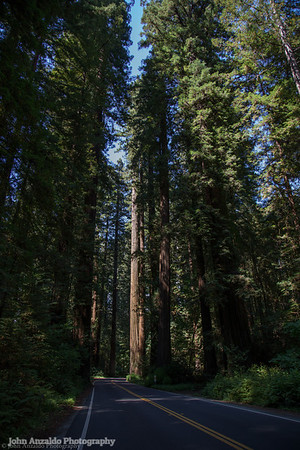 Alley of the Giants