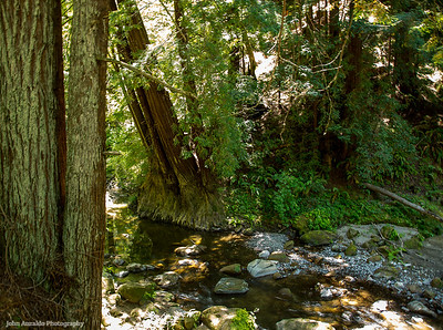 Pescadero Creek Rd.