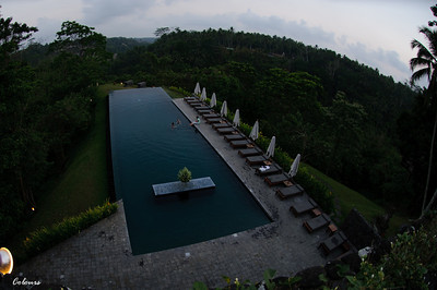 Alila Ubud - The Infinity Pool