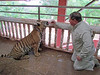 Ken giving a bottle to a tiger! Tiger Temple, 8/17/2012