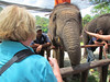 Shirley feeding an elephant. National Elephant Conservation sanctuary, Malaysia, 8/22/2012