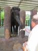Ken feeding an elephant. National Elephant Conservation sanctuary, Malaysia, 8/22/2012