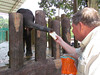 Ken feeding an elephant, National Elephant Conservation sanctuary, Malaysia, 8/22/2012