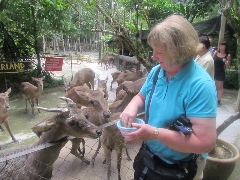 Shirley, Deer Park Zoo, Malaysia, 8/22/2012
