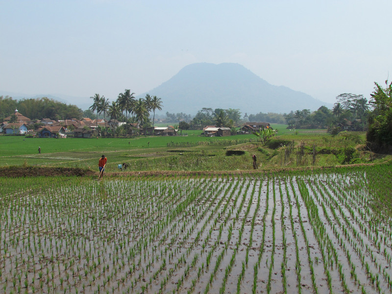 Rice fields and volcano, Java, 9/4/2012