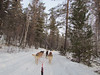 Dog sledding!  Listvyanka, Siberia, 1/22/2013