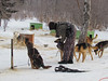 Dog sledding in Listvyanka, Siberia, 1/22/2013