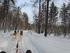 Ken in this dog sled and Shirley in the one to the upper right. Listvyanka, Siberia, 1/22/2013