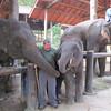 Ken feeding an elephant, Maesa Elephant Camp, Thailand, 10/11/2013