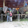 Ken and Shirley, Maesa Elephant Camp, Thailand, 10/11/2013