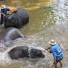 Maesa Elephant Camp, Thailand, 10/11/2013