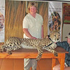 Shirley petting a cheetah!!  Ann Jean Van Dyk Cheetah Centre, South Africa, 3/9/2014