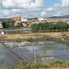 Rice fields, Antananarivo, the capital of Madagascar, 4/8/2014