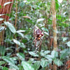 Spider! Andasibe-Mantadia National Park, Madagascar, 4/10/2014