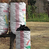 Bags of homemade charcoal from trees illigally cut down. Madagascar, 4/11/2014