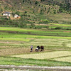 Working in rice fields, Madagascar, 4/12/2014