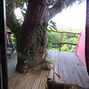 Our balcony with tree, Hotel Crystals, Soufriere, St Lucia, 3/13/2018