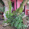 Tree on our balcony, like being in a tree house, Hotel Crystals, Soufriere, St Lucia, 3/13/2018