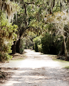 Avery Island, LA - Jungle Gardens