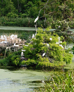 Avery Island, LA - Jungle Gardens - Bird City