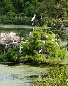 Avery Island, LA - Jungle Gardens - Bird City