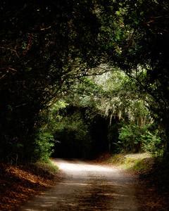 Avery Island, LA - Jungle Gardens - Holly Hedge