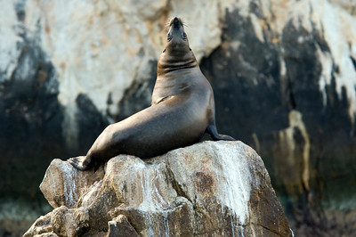 Seal at Lands End