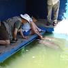Feeding the manatees at rescue center