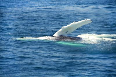 Whale Watching, Plymouth, Massachusetts