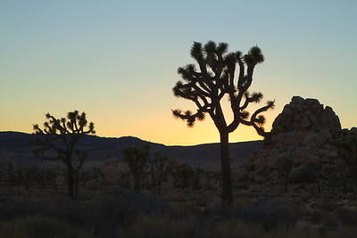 """Joshua Tree"", California"