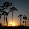 Everglades Sunset I