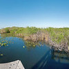 Everglades: Ahinga Trail I