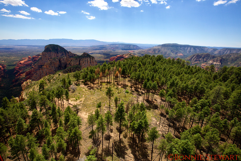 Flying over a Pine Forest in Sedona
