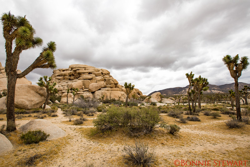 Hidden Valley with massive boulders and meandering trails