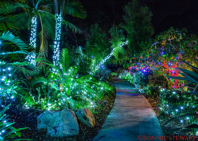 Botanical Gardens at Christmas