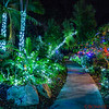 Botanical Gardens at Christmas