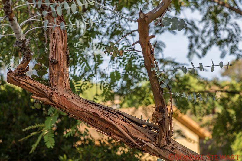 Natural Vegetation at Deer Park Monastery Reflecting the Peaceful landscape