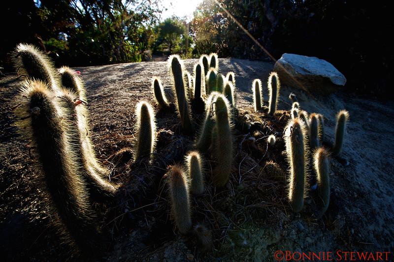 Cacti in the Desert Garden, Balboa Park
