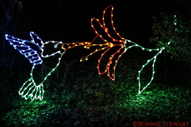 San Diego Zoo lights