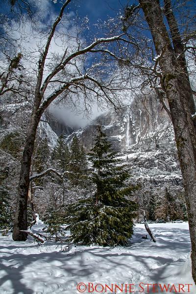 View of Yosemite Falls