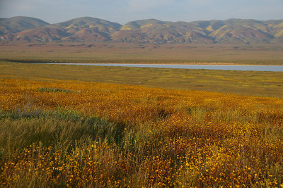Wildflowers at Soda Lake. Next to the lake is a boardwalk with interpretive signs.