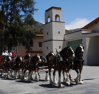 We spent time walking around Avalon. The Budweiser Clydesdale Horses were in town for the 4th of July celebration.