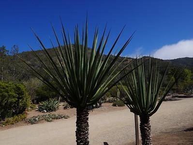 Lots of unusual plants.