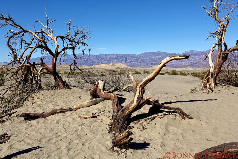 Desert wood sculptures