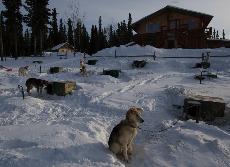 Sled dogs at Northern Sky Lodge