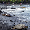 Green Turtles coming and going on the Punalu'u Black Sand Beach