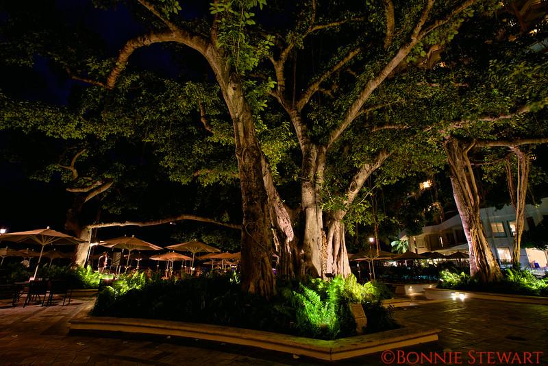 Banyan Courtyeard and the Beach Bar in the Moana Surfrider Hotel