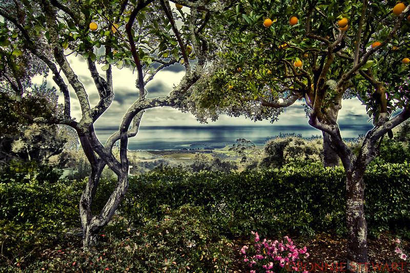 View of the coast from Hearst Castle - stylized