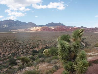 Cacti, Desert, and Hills
